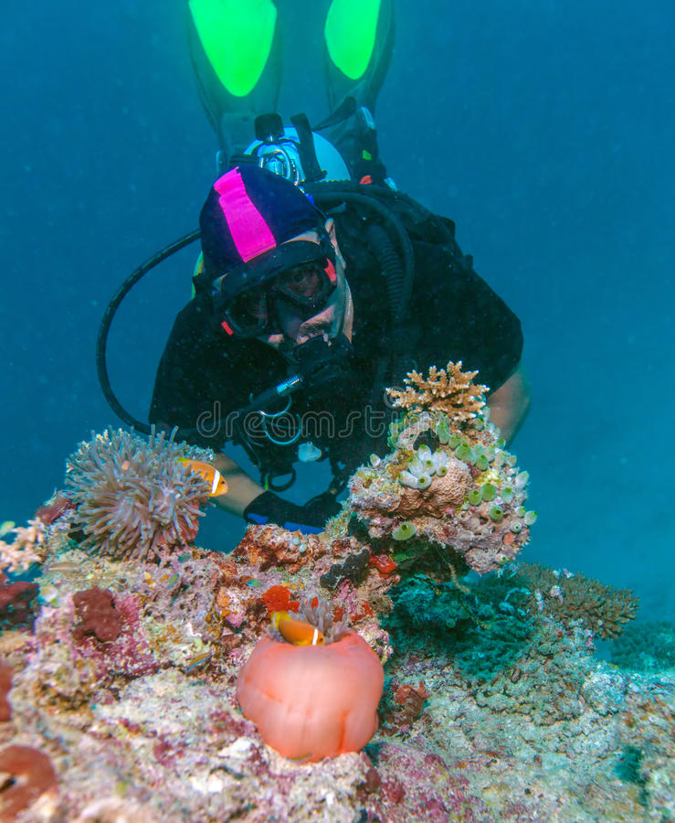 Big Purple Anemone and Scuba Diver stock photography
