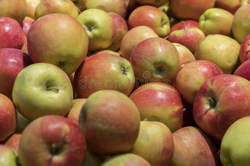 Big red apples in the store. Many red apples in mall on sale closeup shot natural color image. Healthy and natural foods with high. Fiber content royalty free stock photography