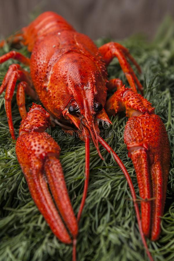 Big red boiled lobster on green drill background. Beer snacks. stock image