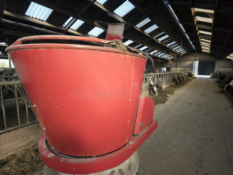 Big red feeding robot and black and white spotted cows in barn on dutch farm in holland. Big red feeding robot and black and white spotted cows in barn on dutch royalty free stock photos