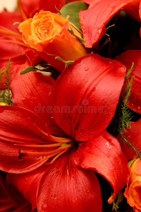 Big red flower stock photo image of pretty fresh flower 1320010 download big red flower stock photo image of pretty fresh flower 1320010 mightylinksfo