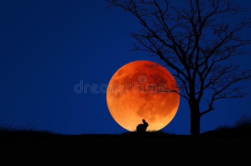 Big red full moon in blue sky and the field in the evening stock images