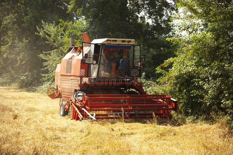 A big red harvester. Big green harvester cuts the mature seeds of grain royalty free stock photos