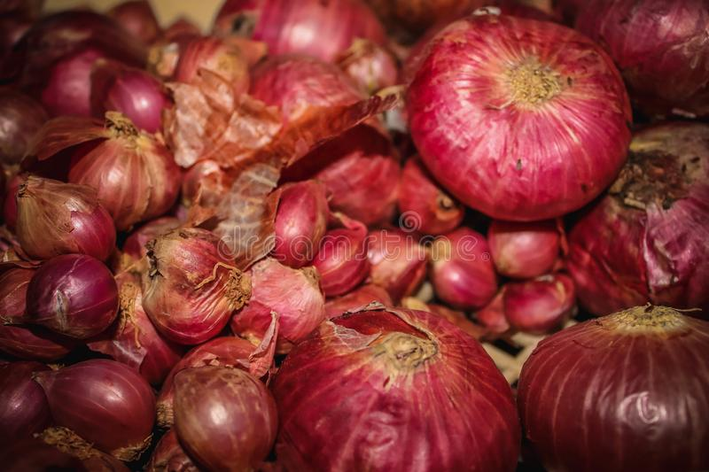 Big Red Onions and Small Onions Shallots royalty free stock photography