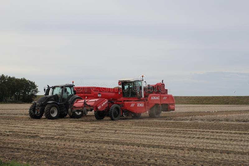 A red potato harvester and a tractor with tipping trailer in the fields. A big red potato harvester is harvesting potatoes in zeeland, the netherlands and royalty free stock images