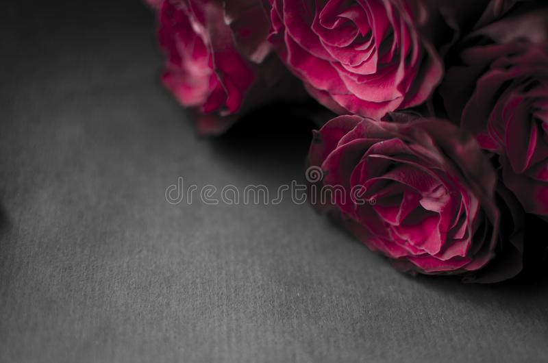 Big red rose bouquet. Nice happy birthday gift. Present from man. To a woman royalty free stock images
