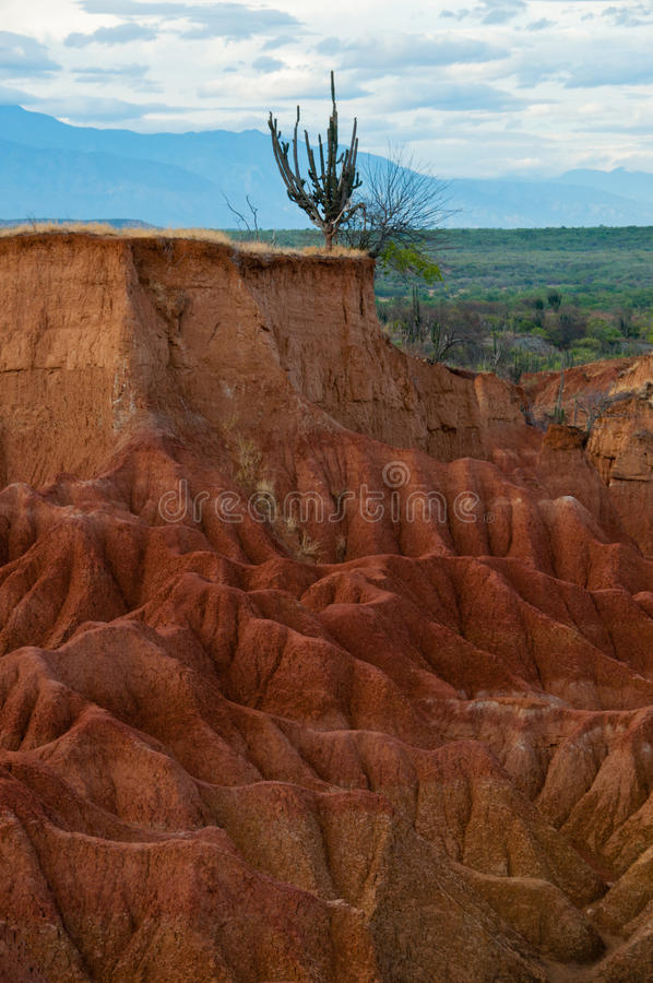 Big red sand stone cliff dry hot tatacoa desert. With cactus, huila in Colombia stock photography