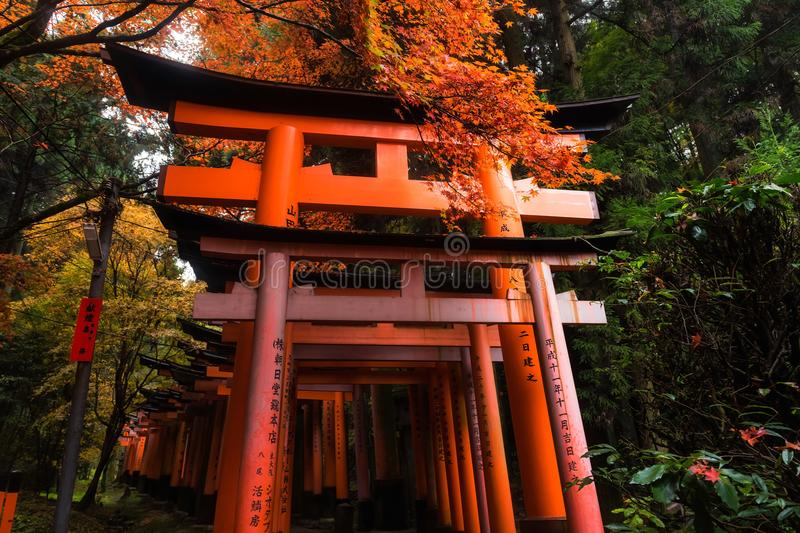 Fushimi Inari shrine at fall, Kyoto. BIg red Torii gate with autumn foliage colors at fall of Fushimi Inari shrine temple, Kyoto, Japan. One of most famous royalty free stock photography