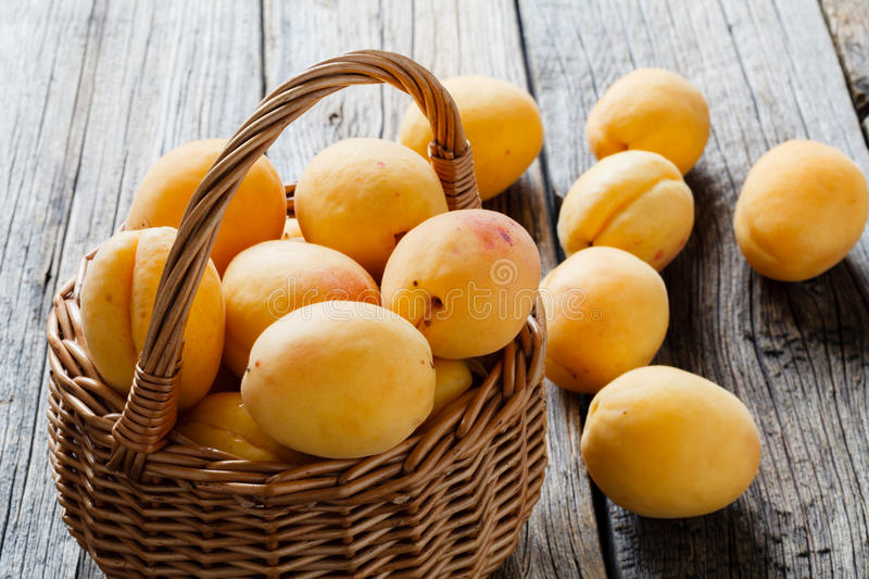Big ripe apricots in basket. Juicy, soft fruit, resembling a small peach stock images