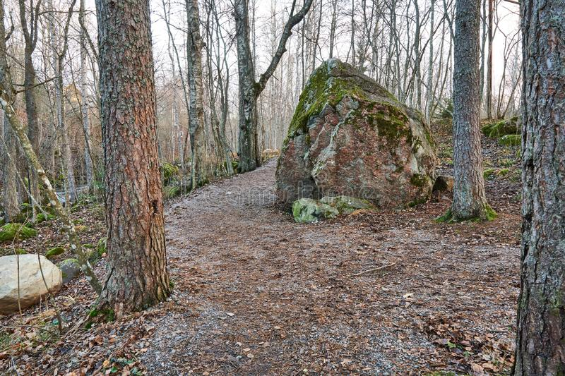 Big rock in forest. Beside a trail. Surrounded by big trees. Partially moss covered royalty free stock photography