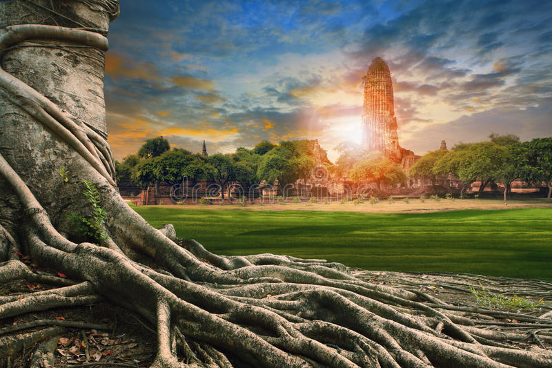 Big root of banyan tree land scape of ancient and old pagoda in. History temple of Ayuthaya world heritage sites of unesco central of thailand important stock photo