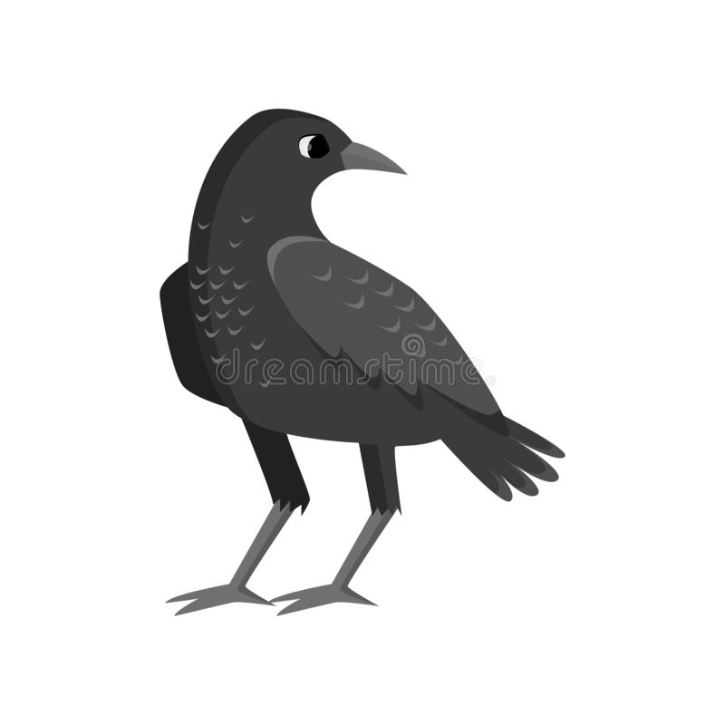Free Big Rugged Black Crow Isolated On White Background Royalty Free Stock Photography - 139767527
