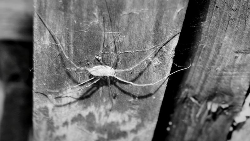 Danger big spider on the wall royalty free stock image
