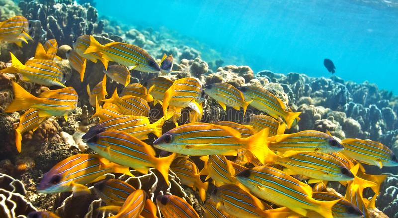 Big school of fish stock photo