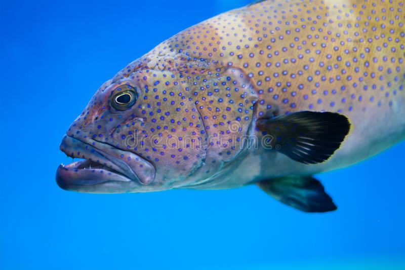 Big sea patterned fish on a blue deep ocean. Tinted old paper background. soft focus photo royalty free stock image