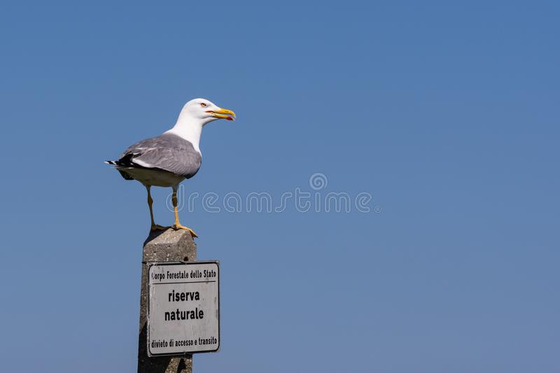 The big seagull rests on a pole with a signboard of the natural. Reserve, sky blue background, horizontal image stock images