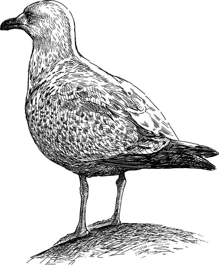 Big seagull vector illustration