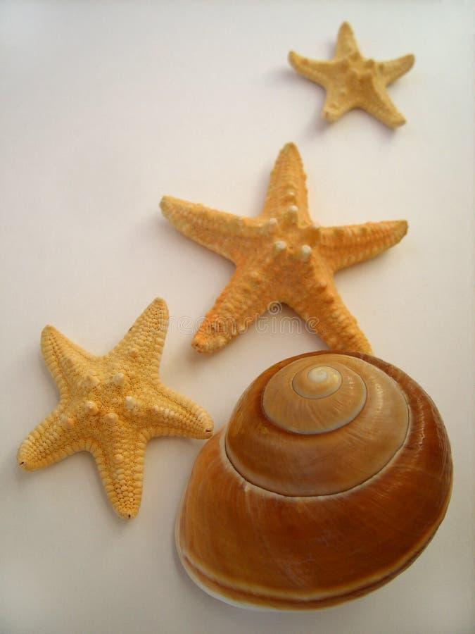 Big seashell and starfishs royalty free stock photography