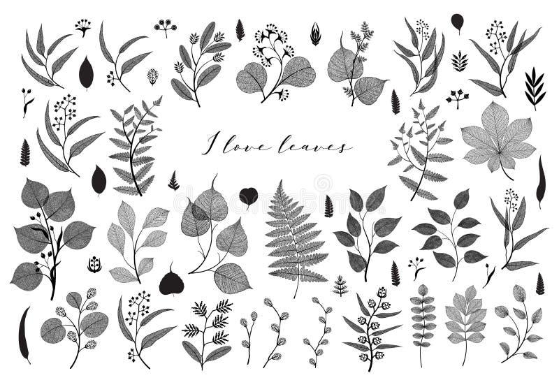 Big set of branches and leaves, fall, spring, summer. Vintage botanical illustration, floral elements in black design. On white background royalty free illustration