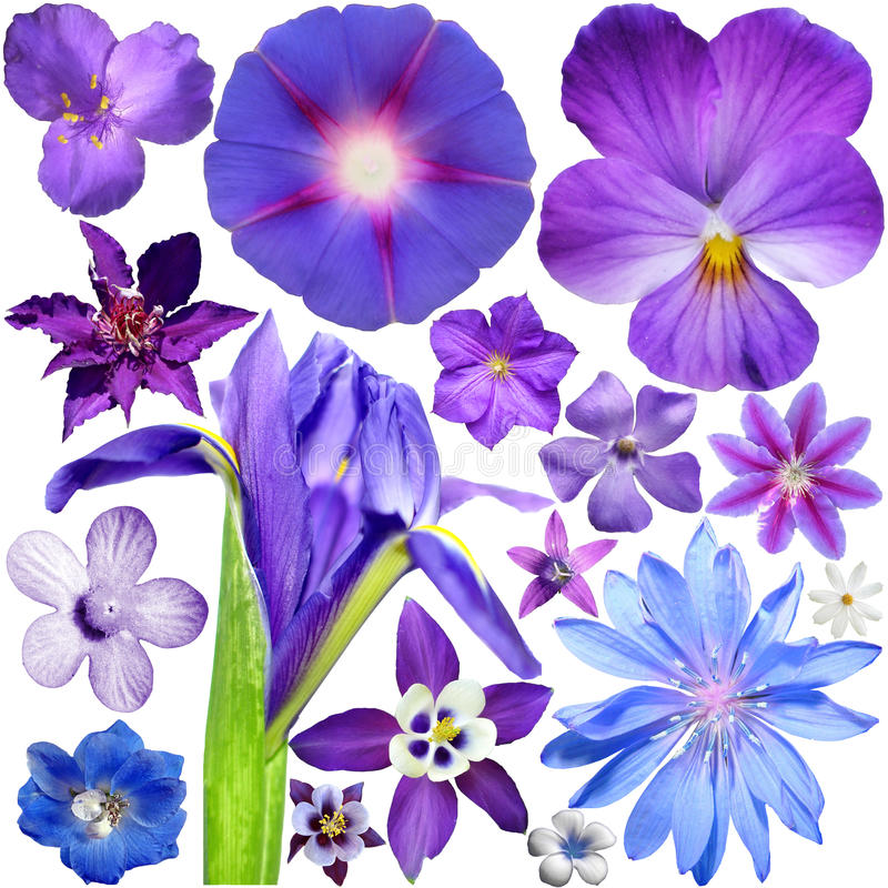 Big Set of Blue - Purple Flowers stock photo