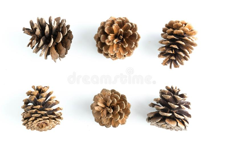 Big set of cones various coniferous trees isolated royalty free stock image