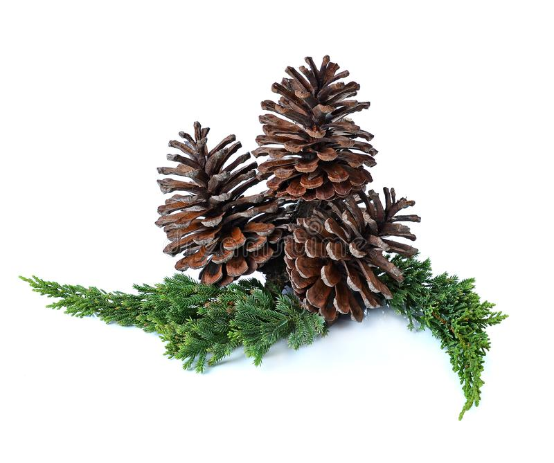 Big set of cones various coniferous trees isolated on white royalty free stock image