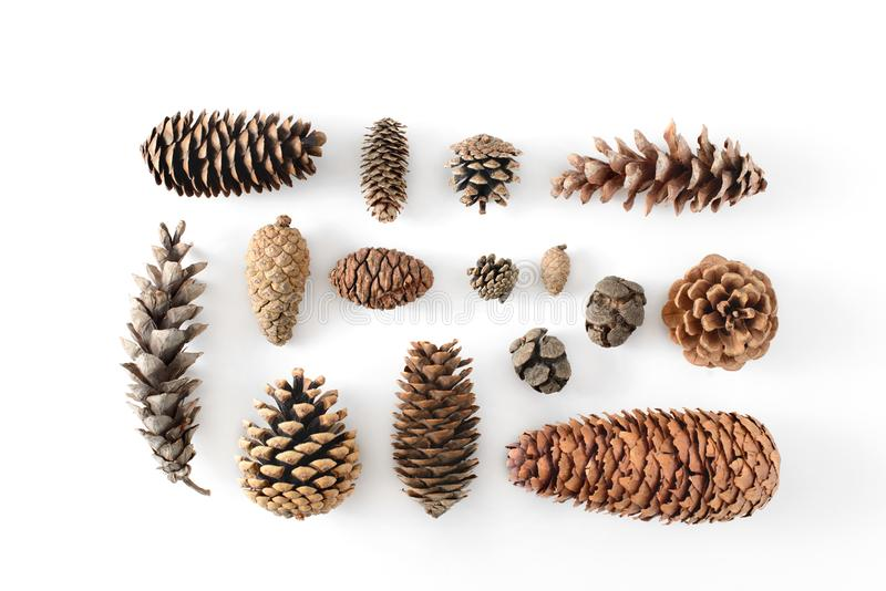 Big set of cones various coniferous trees isolated on white, view from above. royalty free stock photo