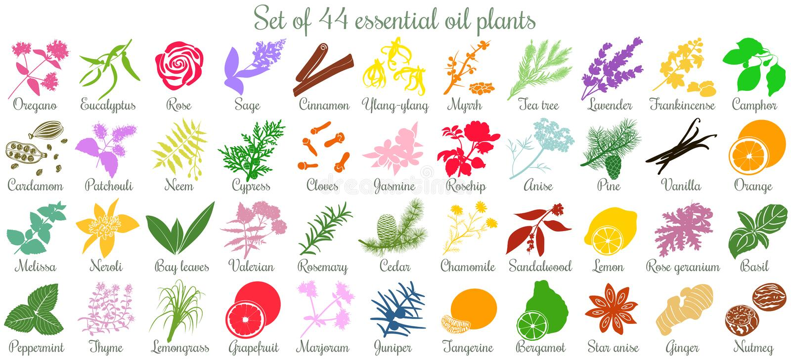 Big set of 44 essential oil plants. flat style, colored stock illustration