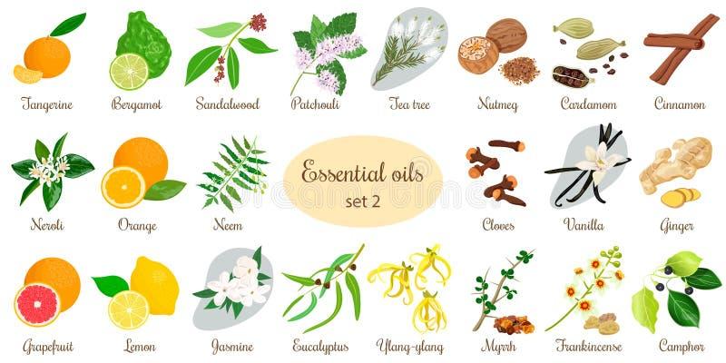 Big set of essential oil plants. Vanilla, cinnamon, jasmine, tea tree, bergamot, sandalwood, patchouli etc. Big vector set of essential oil plants. Ylang-ylang stock illustration