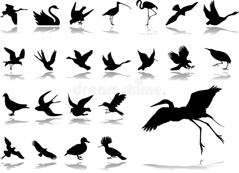 Big set icons - 2. Birds. Set of 23 vector icons for web