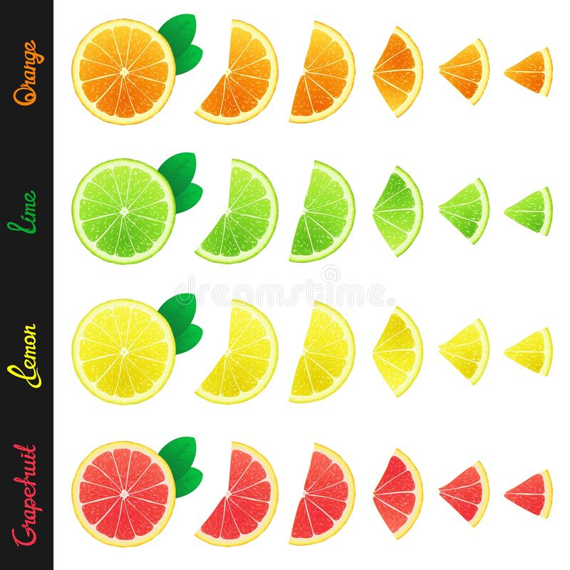 Free Big Set Of Citrus Slices Royalty Free Stock Photo - 55022865