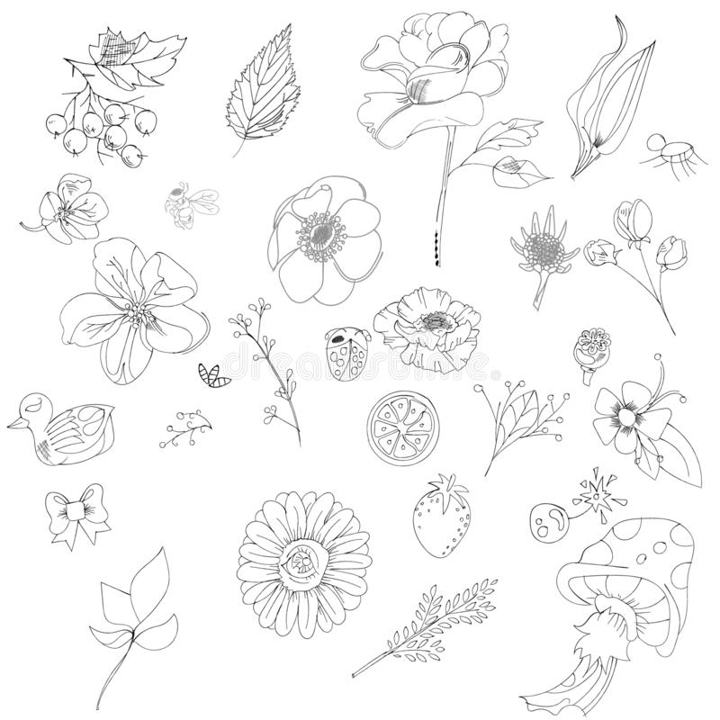 Big set of sketches and line doodles - hand drawn design elements - isolated flowers, leaves, herbs - for decoration royalty free illustration