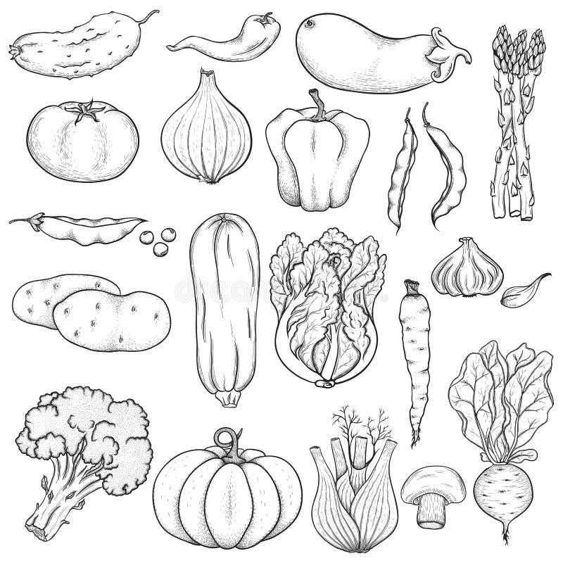 Big set of vegetables. Big collection of hand drawn vegetables. Black on white background. Sketch vector illustration