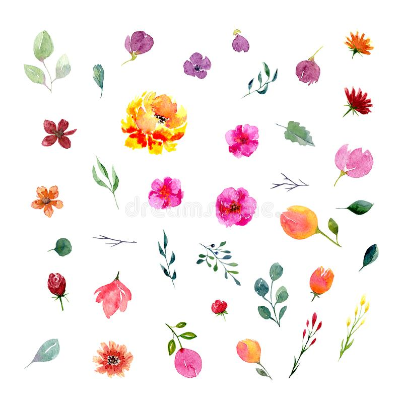 Big set of watercolor flowers and leaves royalty free illustration