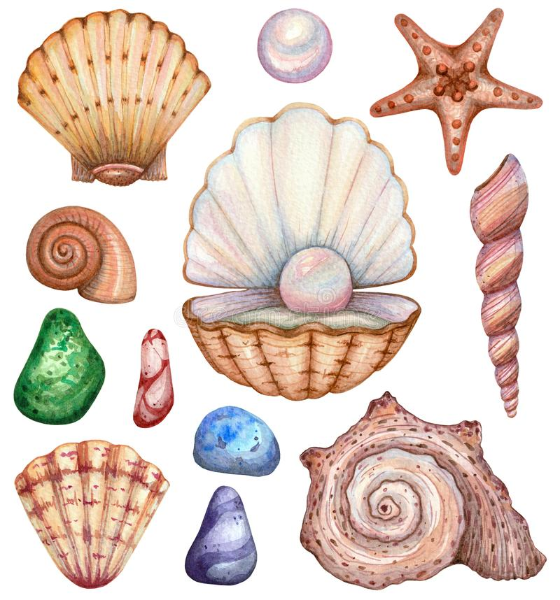 Big set of watercolor shells on a white background vector illustration