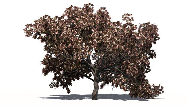 Big single Peach tree in the autumn stock photo