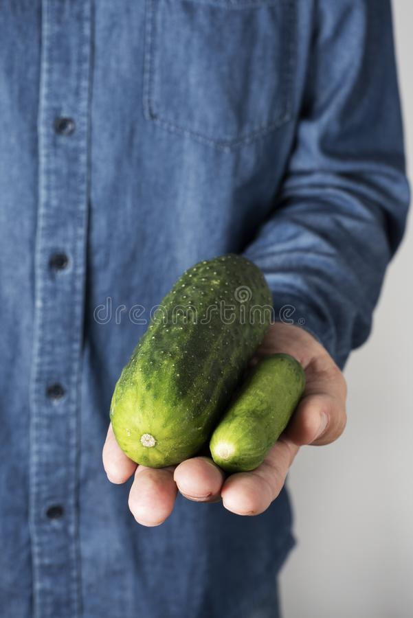 Big and small cucumber in the hand of a man stock photo