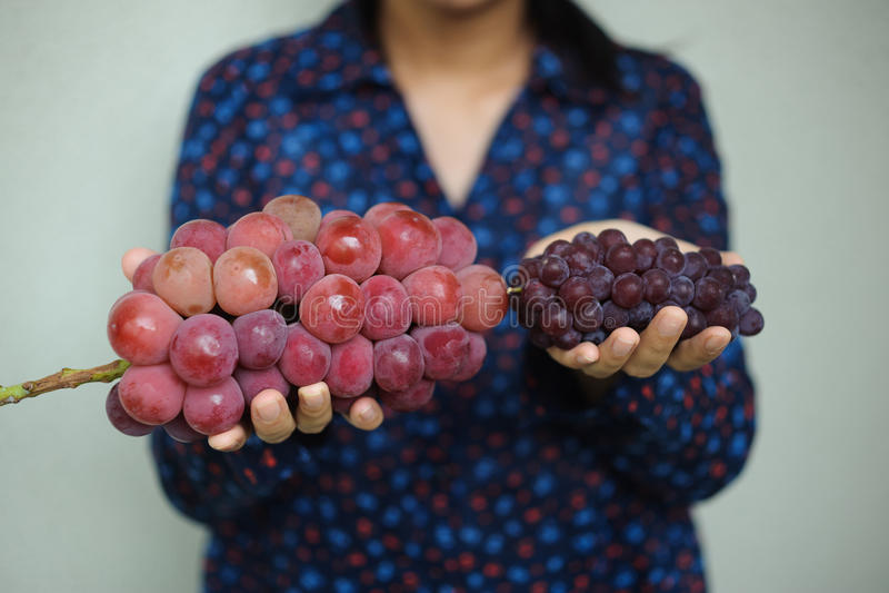 Big and Small Japanese grapes stock image