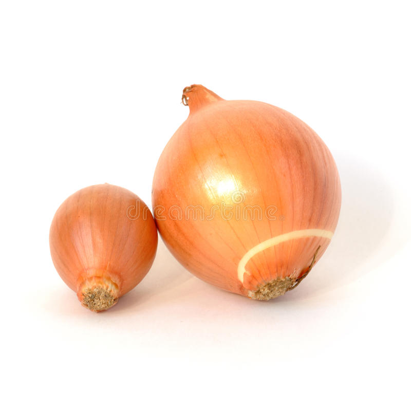 Big and small onions with peel isolated on white royalty free stock images