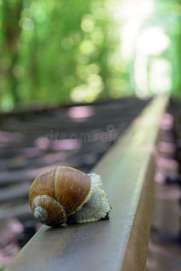 Big snail on the track. Railway between the trees that create a tunnel of green leaves. stock photography