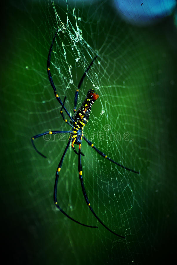 Big spider. A huge spider on its spider web, in thailand royalty free stock photo