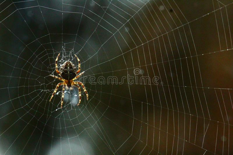 Spider building a web. Big spider building a web royalty free stock photos