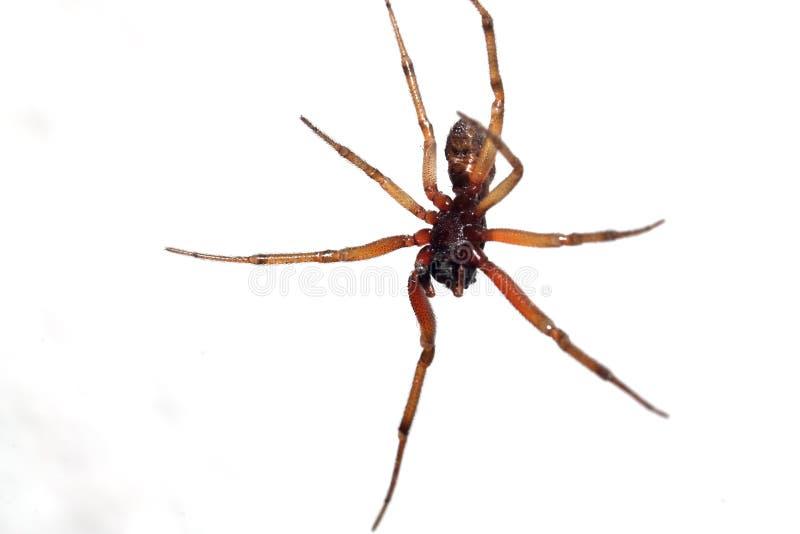 Big spider royalty free stock photo