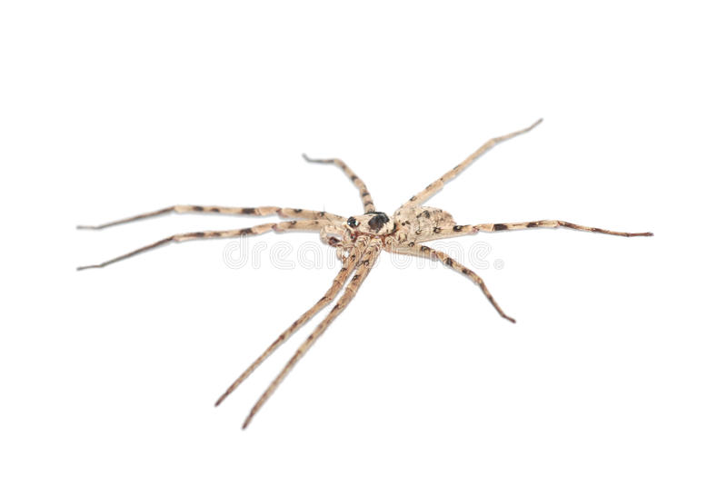 A big spider in white stock photo