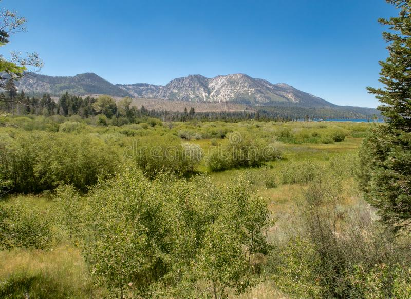A sprawling meadow near Lake Tahoe stock image