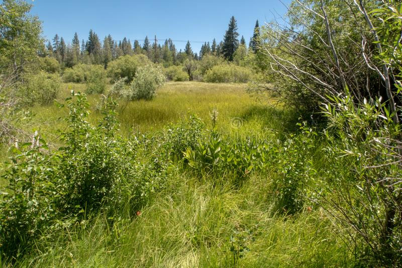 A sprawling meadow near Lake Tahoe stock photography