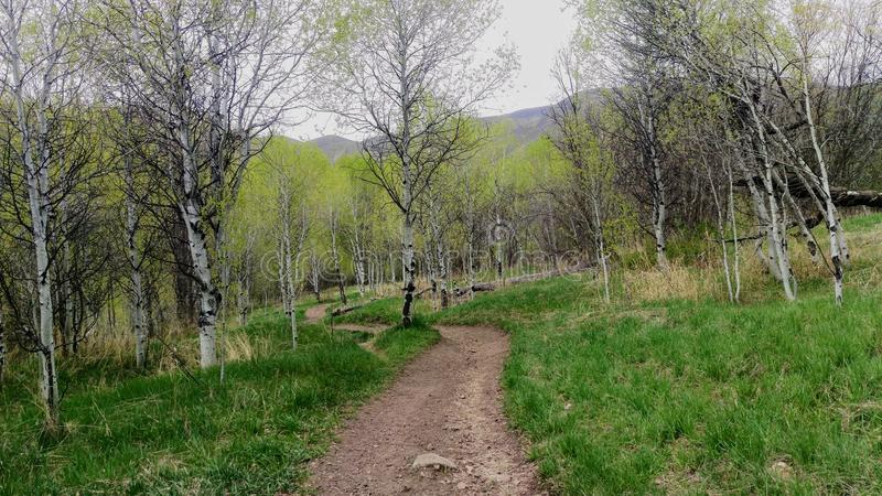 Big Springs Mountain Meadow Path. A path winding down a meadow leading toward the mountain peak in the background. Big Springs Trail, Utah, USA stock photography