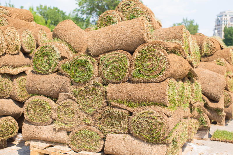 Big stacks of sod rolls for new lawn stock image