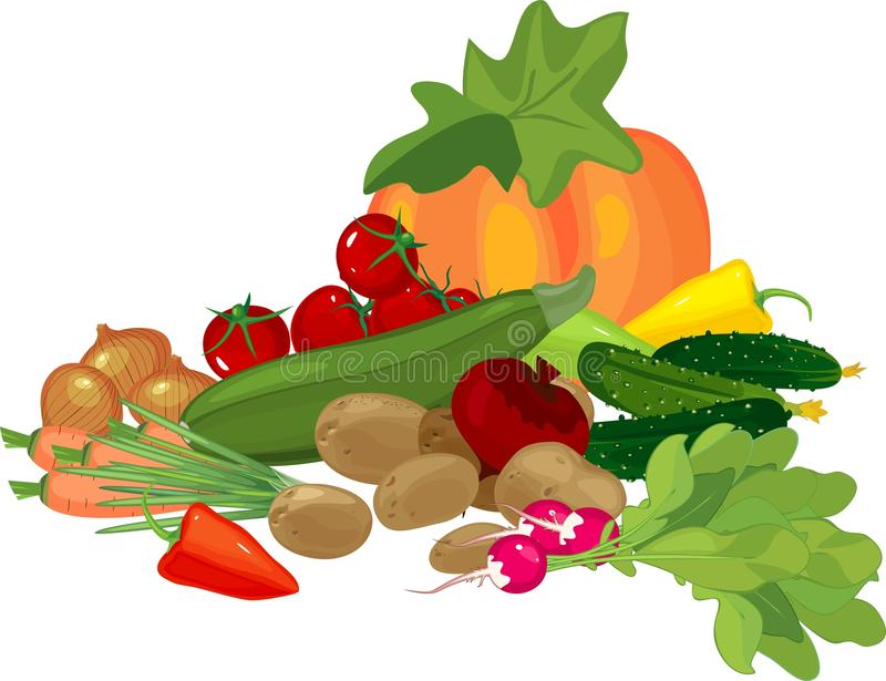 Big still life with autumn harvest. Composition with pumpkin and other different vegetables on white background stock illustration