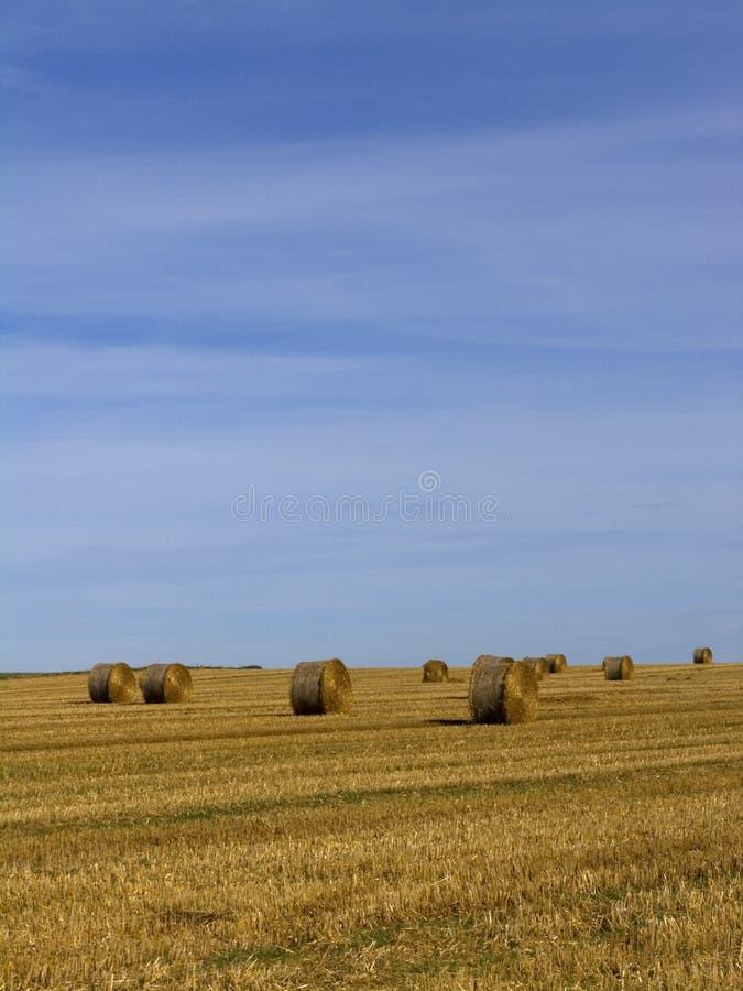Big straw hay bales royalty free stock image